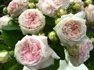 mysterious roses and cold feet essay Poems from different poets all around the world thousands of poems, quotes and poets search for poems and poets using the poetry search.