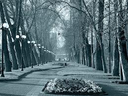 : : Parque Forestal