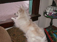Siku watching for Jim the mailman, 2006