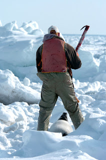 cacciatore foche