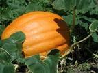 Tratamento Natural para o Ácido Úrico utilizando hortaliças: