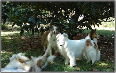 Resultado de imagen de perros a la sombra