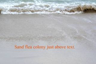how to catch sand fleas in texas