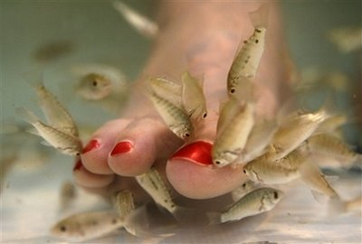 [Fish_pedicure_treatment.bmp]