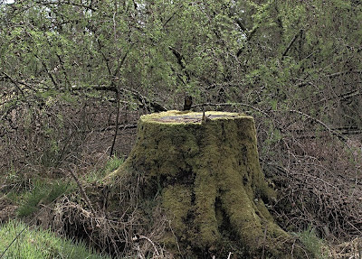 Bush, tree stump