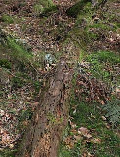 Rotting log