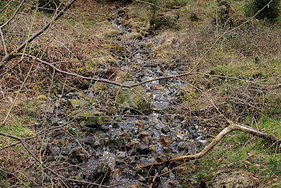 Stream and branches