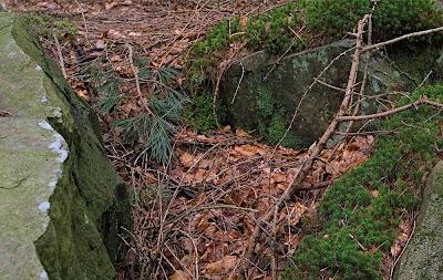 Leaves among rocks