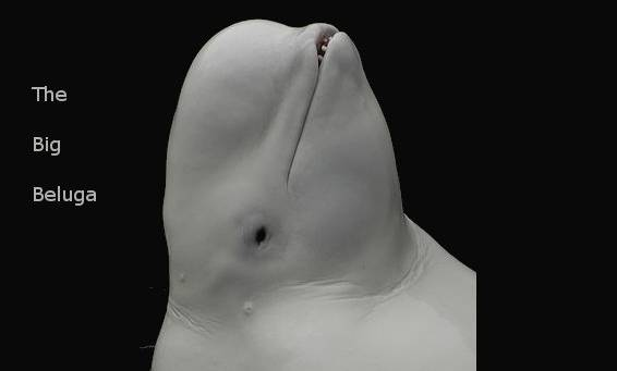 The Big Beluga