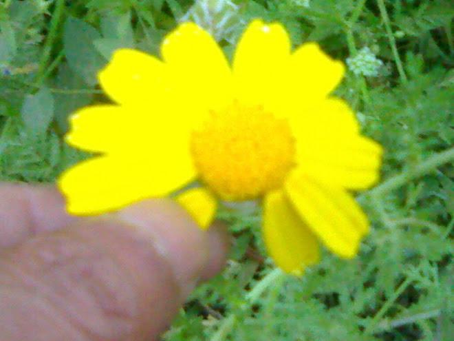 Excesso de amor + Flores sao humanas  (VIDEO)