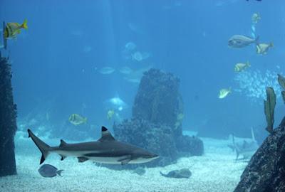Profundidad del océano