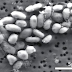 La NASA descubre vida en el arsénico