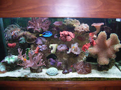 Out with the TV, in with the Aquarium