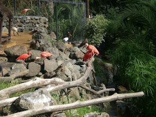 Palmitos Park på Gran Canaria