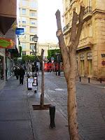 Comienza la poda y sustitución del arbolado de algunas calles