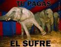 NO! A LOS CIRCOS