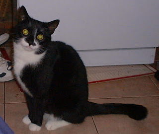 Molly just after she arrived 26th September 2000