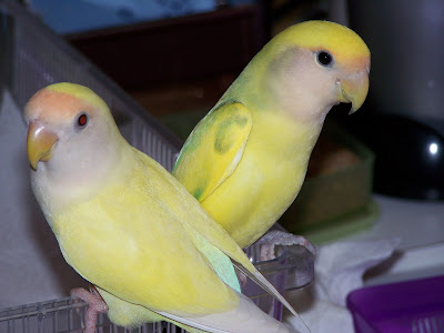 Dewey & Sierra
