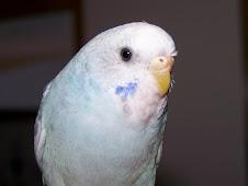 """<a href=""""http://www.birdchannel.com/blog/viewbio.aspx?apid=81557"""">Hedwig - July 4, 2007</a>"""