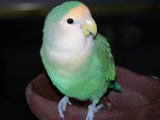 """<a href=""""http://www.birdchannel.com/blog/viewbio.aspx?apid=13230"""">RIP Evee - 8/17/06 - 9/11/13</a>"""