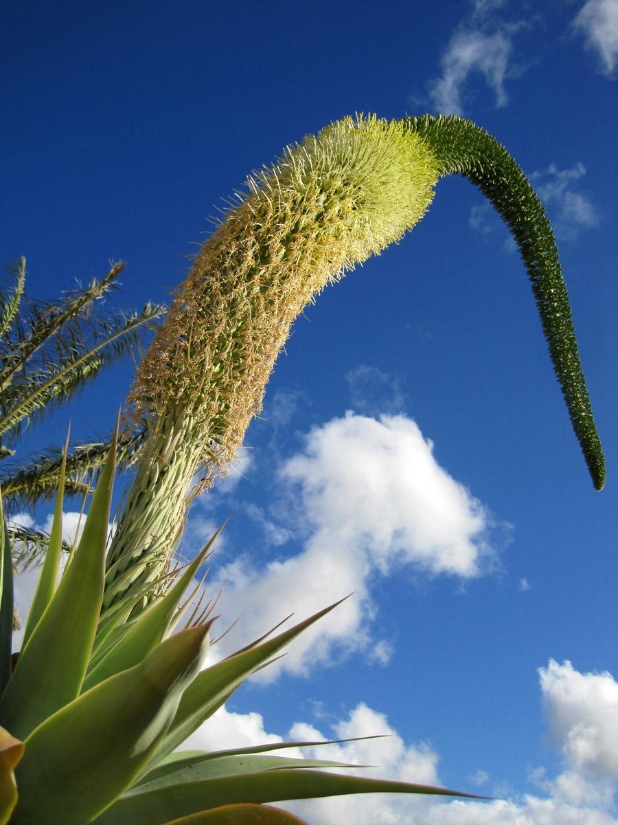 Esos raros jardines Unos jardines muy raros en Fuerteventura