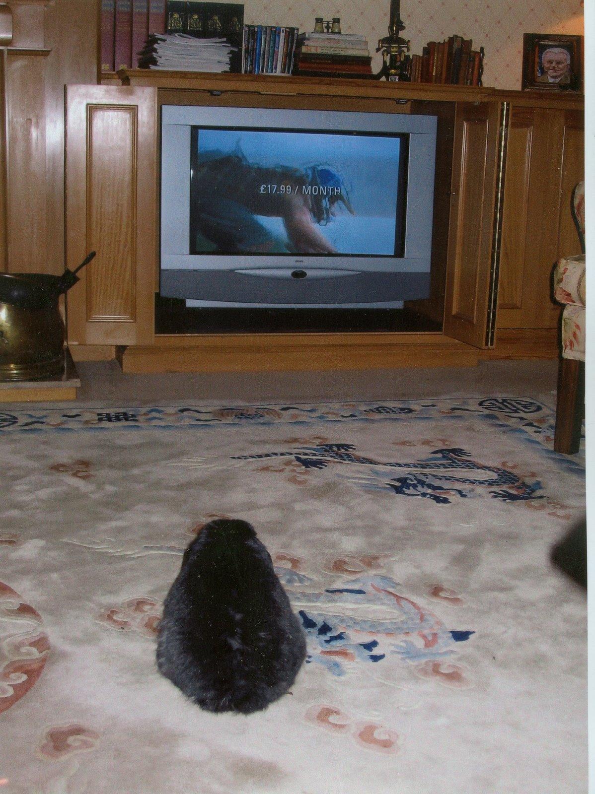 [Harve+watching+TV+copy]