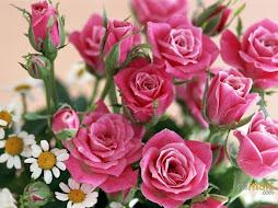 As rosas