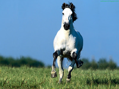 Horse Standard Resolution wallpaper 20