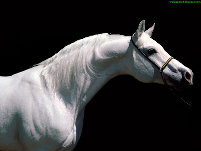 Horse Standard Resolution Wallpaper 34