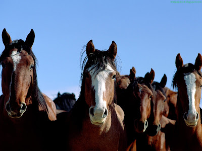 Horse Standard Resolution Wallpaper 59