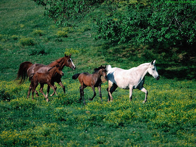 Horse Standard Resolution Wallpaper 62