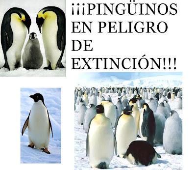 Animales En Peligro De Extincion Pingüinos En Peligro De Extincion
