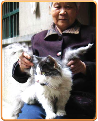 gato+alado Mundo animal e surreal