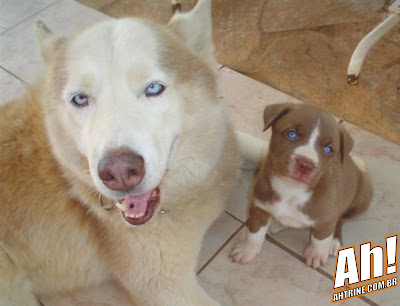HB1 Misturas caninas