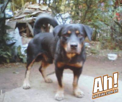 HB3 Misturas caninas