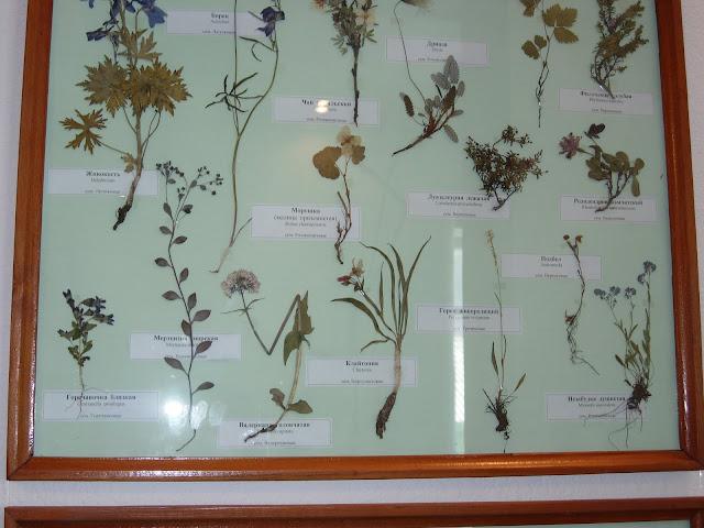 растения в музее эгвекинот