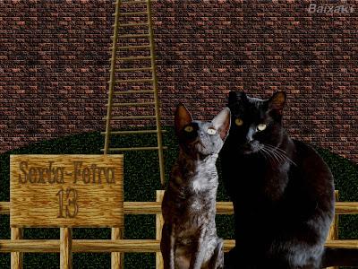Para alguns os gatos pretos também são símbolo de azar