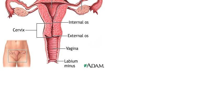 Kanker Ovarium adalah ~ Sehat Online