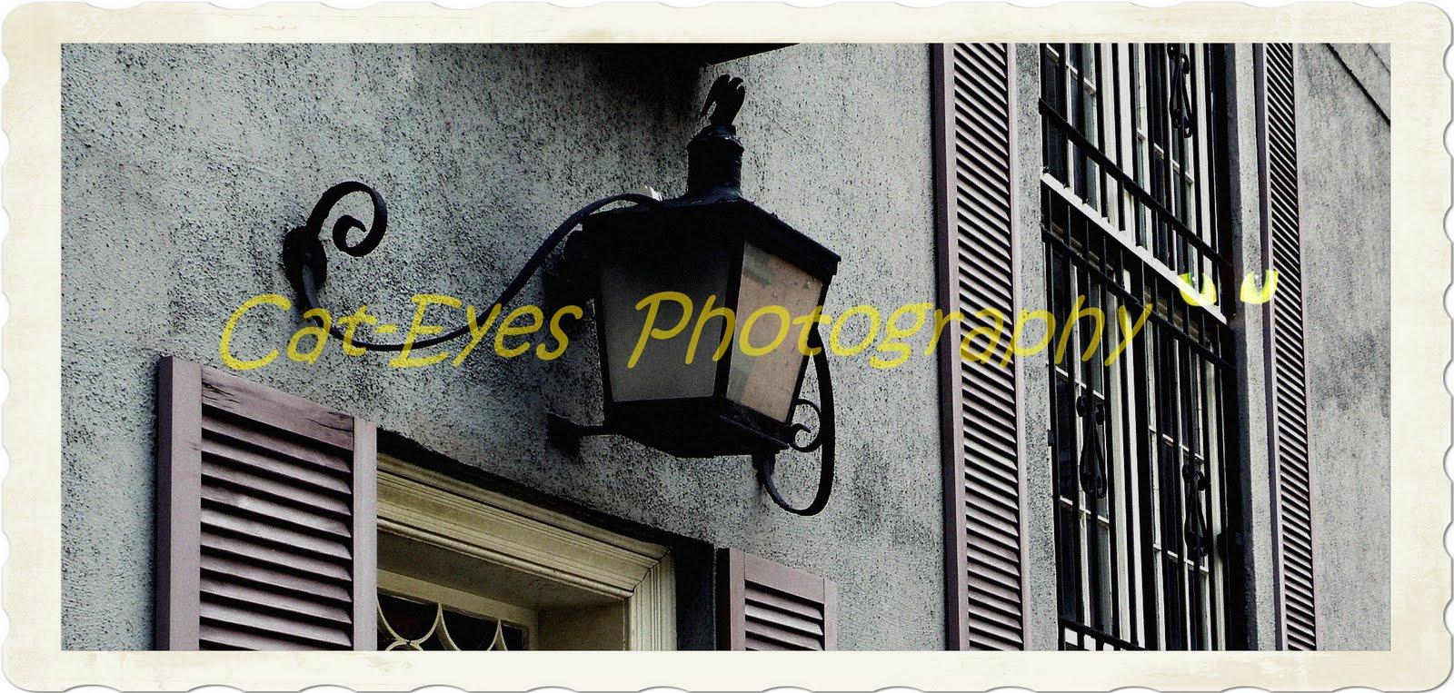 Cat-Eyes   Photography
