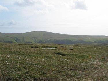 Orkney Bog