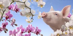 Jede Blüte hat ihren Duft