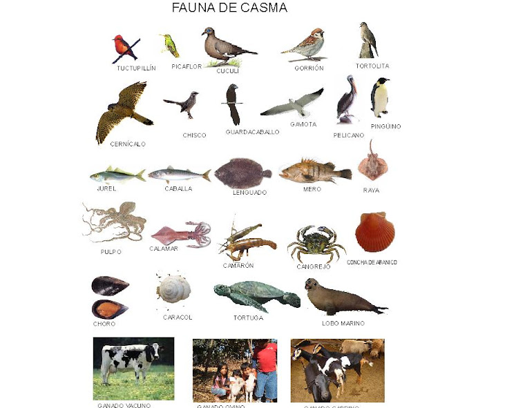 FAUNA DE CASMA