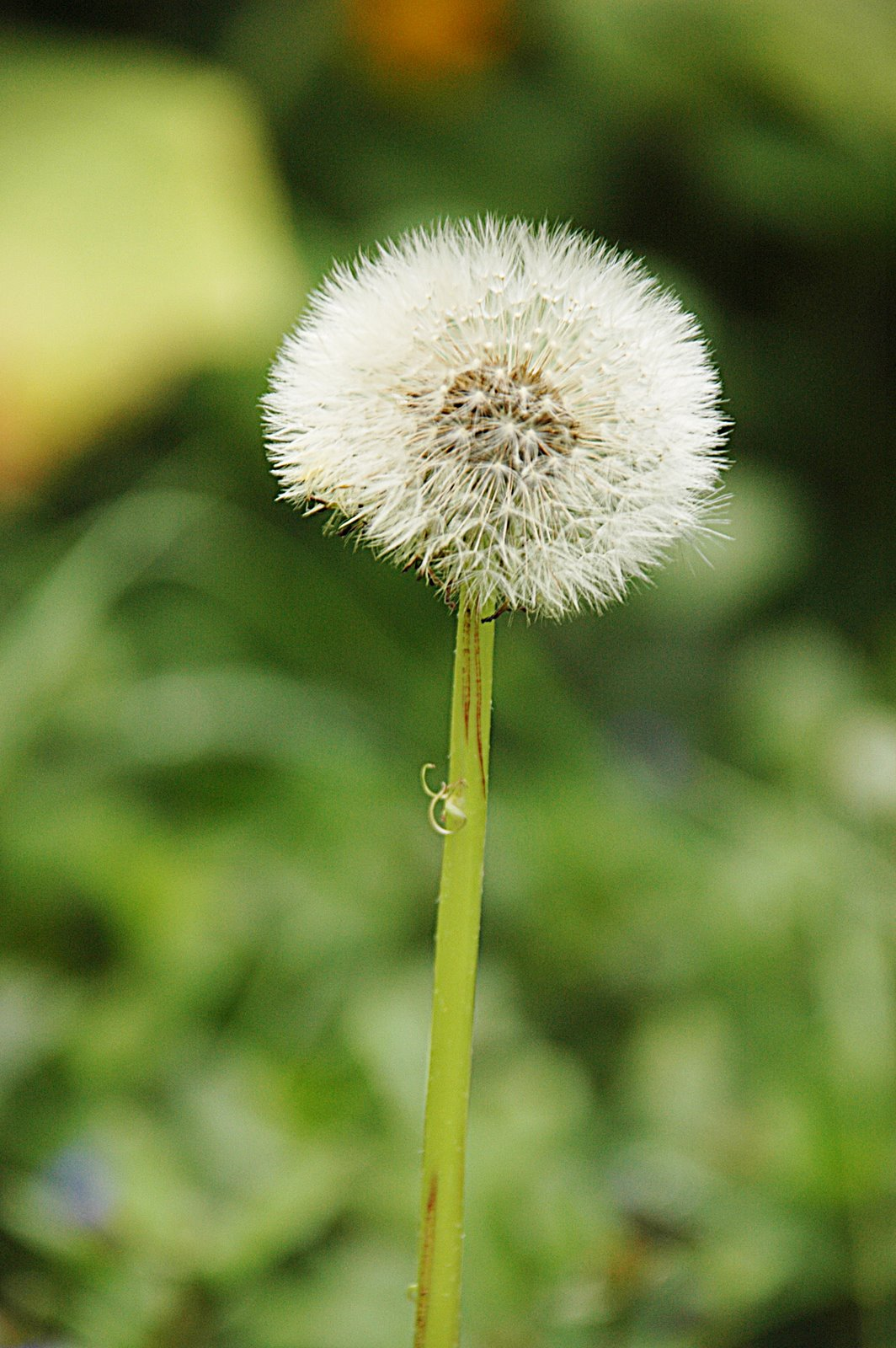 [cute+weed.jpg]