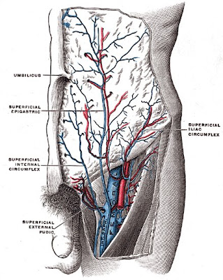 Endoscopia Ginecologica: Laparoscopia y pared abdominal anterior