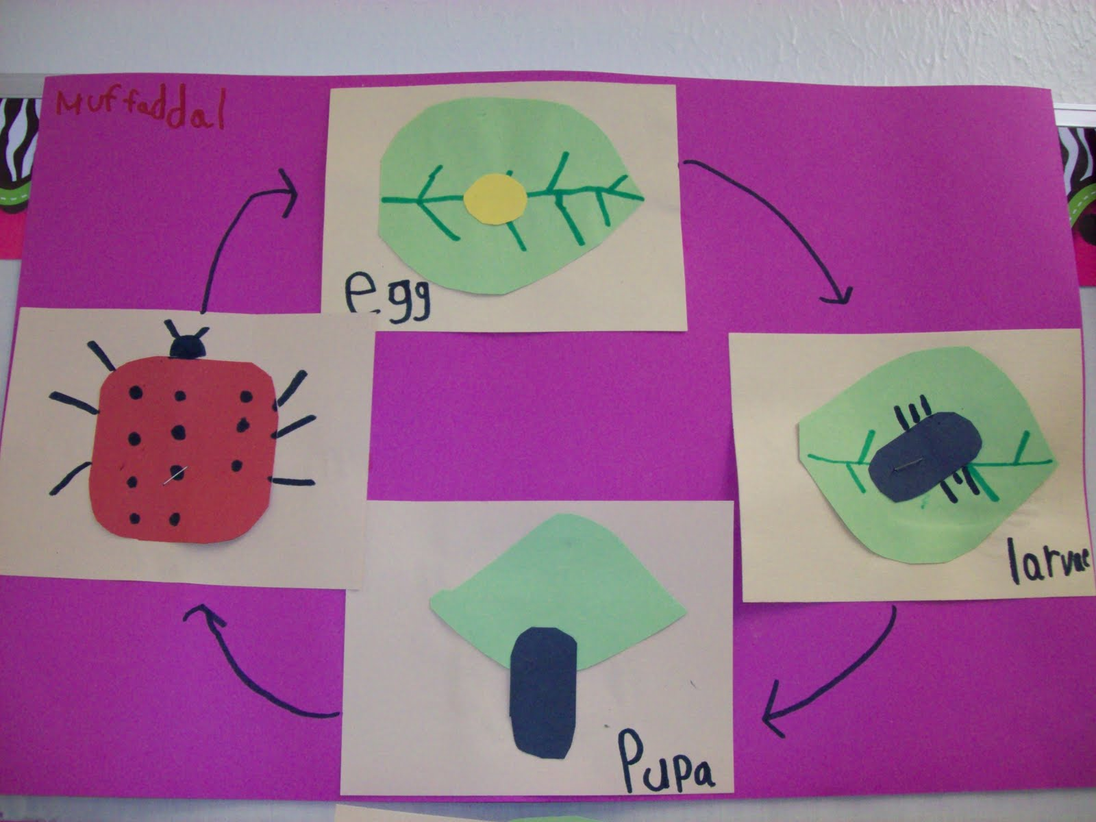 Chalk Talk A Kindergarten Blog Life Cycle Patterns