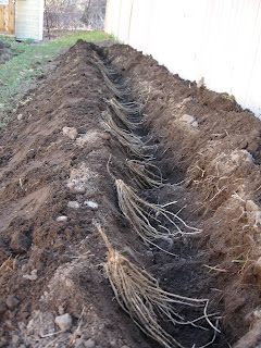 A Root Barrier To Prevent That Which I Dread Having Do With Any Luck They Ll Prefer The Idea Of Free Raspberry Bushes Ve Got My Fingers Crossed