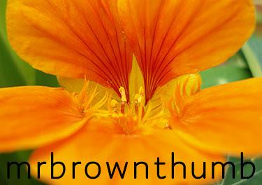 Nasturtium, Edible plant, Urban Gardening
