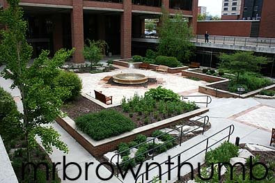 Medicinal/herbal garden UIC Chicago