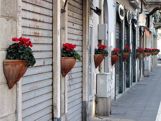 Red flowers, wall pots, via Magenta, Livorno
