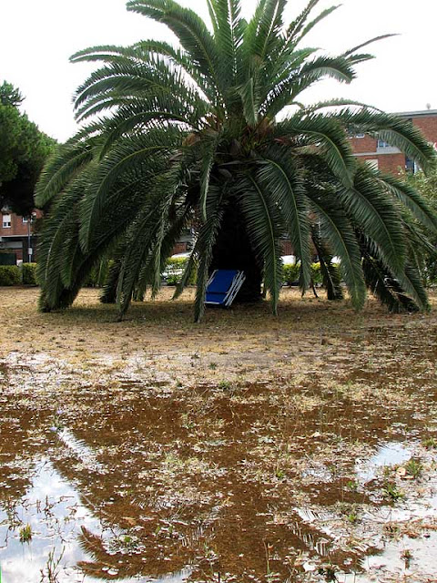 Palm tree, drenchedgrass, Livorno
